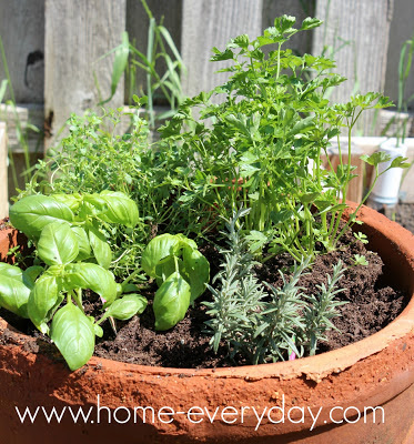An Herb Garden Home Everyday